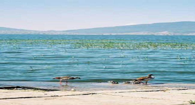 Awasa Lake