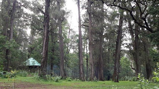 Day 1  Addis to Menagesha